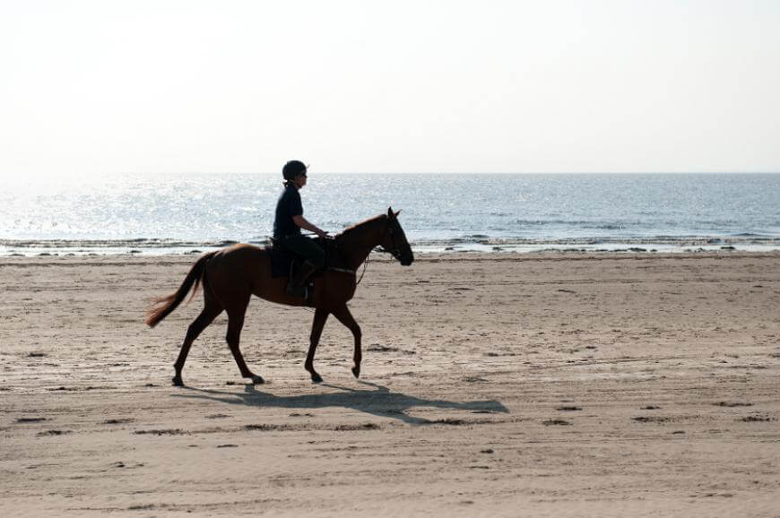 Sandy Glade Horseriding