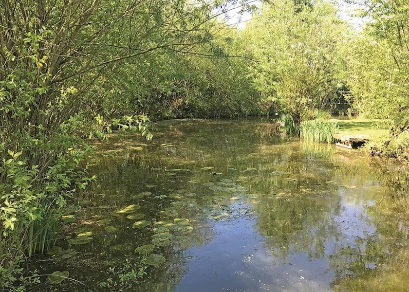 Beechwood Park  Pond