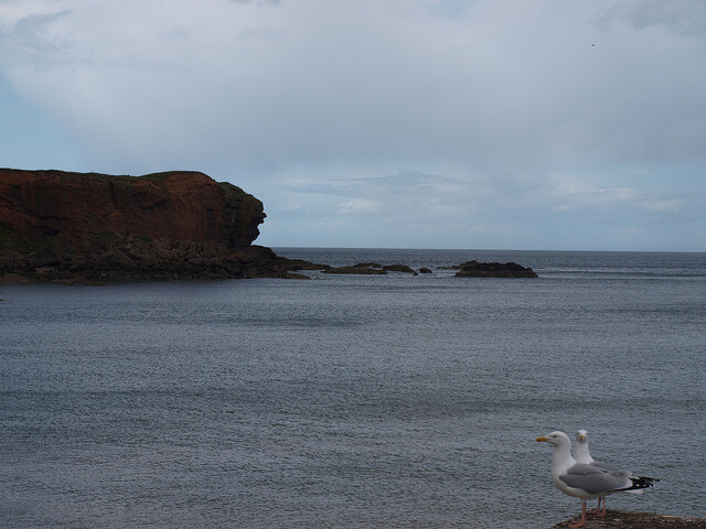 Sea View at Eyemouth - Eyemouth Holiday Park